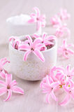 Flowers pink hyacinth Stock Image
