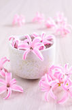 Flowers pink hyacinth Royalty Free Stock Photo