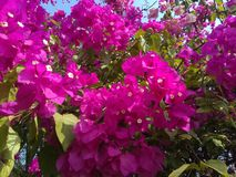 Flowers. Pink nature garden beautiful Royalty Free Stock Images