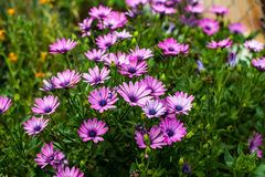 Flowers. Pink flowers in nature during summer Royalty Free Stock Photo
