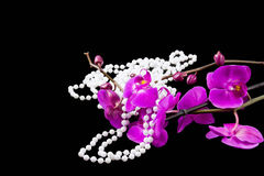 Flowers of pink  orchid and beads from white pearls Stock Photo