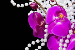 Flowers of pink  orchid and beads from white pearls Royalty Free Stock Images