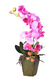Flowers of pink orchid royalty free stock photos