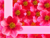 Flowers  pink  petals Stock Images