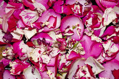 Flowers - Pink Rose Petals Royalty Free Stock Photography