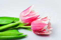 Flowers pink tulips royalty free stock photo