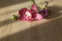 Flowers pink water drops on a light wooden. Background Royalty Free Stock Photos