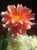 Flowers. Pink, white, farmers market Royalty Free Stock Photo