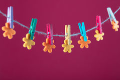 Flowers pinned on clothesline. Minimalism background. Blue, orange, gray background. High resolution photo. Stock Image