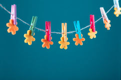 Flowers pinned on clothesline. Minimalism background. Blue, orange, gray background. High resolution photo. Stock Images