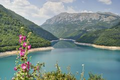 Flowers on the Pivsko Lake, Montenegro. Flowers on the Pivsko Lake near Pluzine town, Montenegro Royalty Free Stock Photos