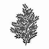 Flowers in plant black and white vector Stock Image