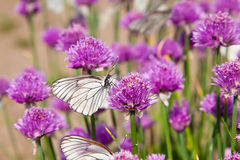 Flowers plant  with Butterflies Royalty Free Stock Photo