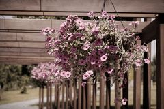 Flowers and plant in flowerpot, Growing plant in wooden flowerpot.  royalty free stock photography