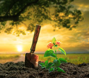 Flowers plant and gardening tool against beautiful sunlight in g Stock Image