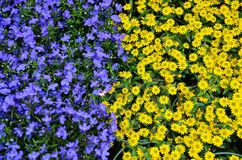 Flowers, Plant, Nature, Blue Stock Photo