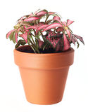 Flowers in plant pot Royalty Free Stock Photography