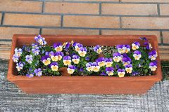 Flowers in plant pot. Stock Photos