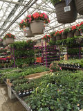 Flowers and plant selling at store. Spring flowers selling at home improvement store Lowes, TX USA stock photo