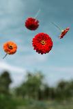 Flowers planted float in weightlessness. Red flowers thrown to the sky and soar in weightlessness Royalty Free Stock Photo