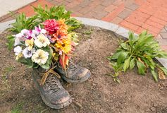Flowers planted in old pair work or hiking boots. Mixed flowers planted in old pair work or hiking boots as decoration in enclosed dirt circle on brick stock photography