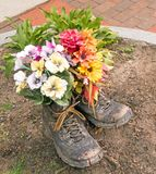 Flowers planted in old pair work or hiking boots. Mixed flowers planted in old pair work or hiking boots as decoration in enclosed dirt circle on brick stock image