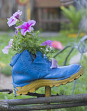 Flowers planted in an old Shoe Royalty Free Stock Image