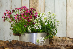 Flowers are planted in a vintage flowerpot. Flowers are planted in a vintage flowerpot decorated on wood Stock Photography