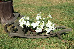 Flowers planted on wheelbarrow Royalty Free Stock Photos