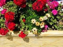 Flowers in Planter Box, Greek Island Stock Photography