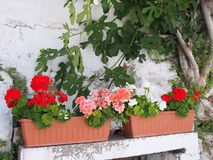 Flowers in Planter Boxes, Greek Island Royalty Free Stock Image