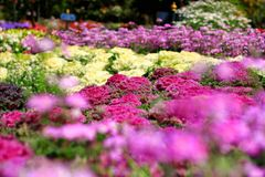 Flowers and plants are blooming. Stock Photography