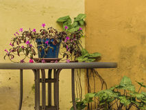 Flowers and Plants at Courtyard Home. Violet flowers and green plants at small courtyard home stock photo