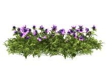 Flowers plants Stock Photos