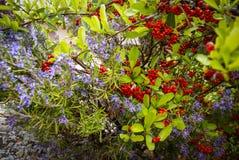 Flowers and plants, Molinos, Teruel, Aragon, Spain Stock Photos