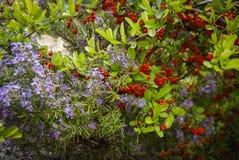 Flowers and plants, Molinos, Teruel, Aragon, Spain Stock Image