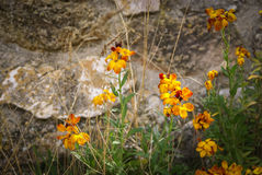 Flowers and plants, Molinos, Teruel, Aragon, Spain Royalty Free Stock Images