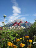 Flowers and plants, moutain Royalty Free Stock Image
