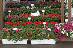 Flowers nursery Royalty Free Stock Photos