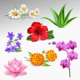 Flowers Plants Realistic Icons Collection. Succulents tropical garden plants with greenhouse orchid and forest violets chamomile flowers gradient grey background Stock Photography