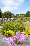 Flowers and plants Scilly Islands Royalty Free Stock Photos