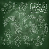 Flowers and plants set on chalkboard background Stock Photos