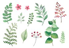 Flowers and plants set watercolour vectors leaves and branches. A set of vector watercolor leaves, flowers and branches. Lovely design elements to make your own stock illustration