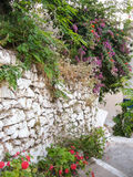 Flowers and plants. On the stone wall Royalty Free Stock Photography