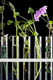 Flowers and plants in test tubes Royalty Free Stock Photos