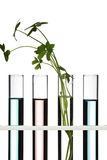 Flowers and plants in test tubes Stock Images