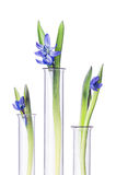 Flowers and plants in test tubes isolated on white. Stock Photography