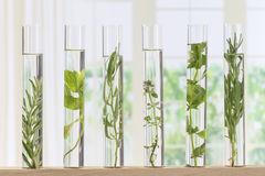 Flowers and plants in test tubes Stock Photography