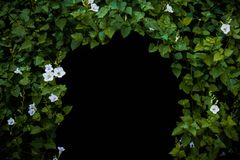 Flowers and plants tunnel,Blank for copy,isolated black background stock photos