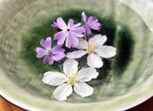 Flowers on a plate Royalty Free Stock Photography